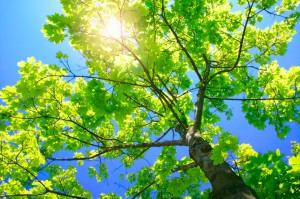Tall Green Tree